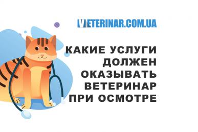 Какие услуги должен оказывать врач ветеринар для вашего питомца при осмотре