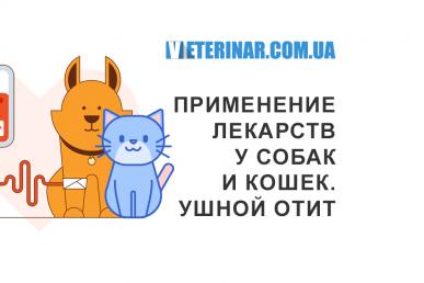 Правильное применение лекарств у собак и кошек, симптомы ушной инфекции, отита