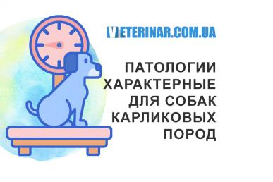 Патологии собак карликовых пород