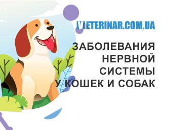 Заболевания нервной системы у кошек и собак