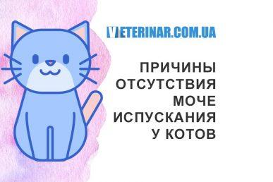 Причины отсутствия мочеиспускания у котов